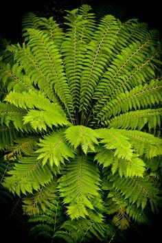 Large fern seen from above