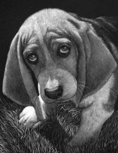 Animal Drawings Scratched out of Ink with the Scratchboard, come see how it is done. To see more art and information about Lorna Hannett click the image. Pencil Drawings Of Animals, Scratchboard Art, Guilty Dog, Scratch Art, Gray Matters, Dogs And Puppies, Wildlife, Sketches, Ink
