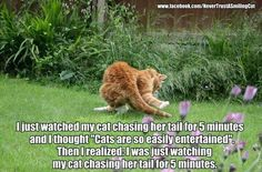 #cats #love #instagood #photooftheday #beautiful #cute #happy #fashion #followme #me #follow