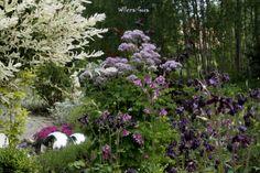 Border in violet. Wilcza Gora Garden