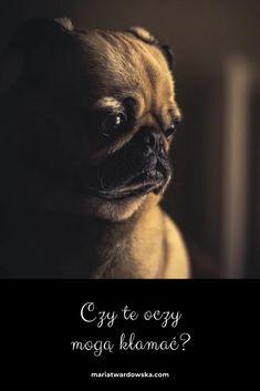 Ikon, Dogs, Animals, Animales, Animaux, Animal Memes, Animal, Icons, Pet Dogs