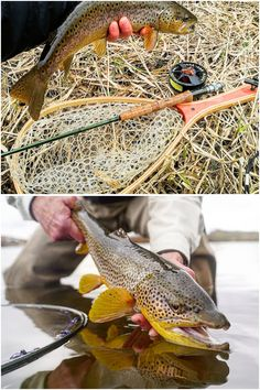Use a depth finder. Since catching lake trout is so dependent on finding out at . - Use a depth finder. Since catching lake trout is so dependent on finding out at what they're loc - Lake Trout Fishing, Trout Fishing Tips, Bass Fishing, Fish Bites, The Bait, Famous Last Words, Make It Simple, Investing, Image Link