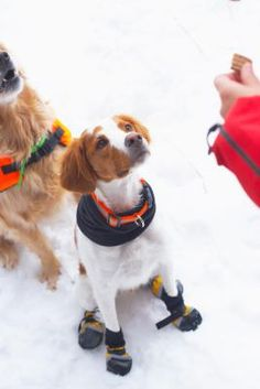Nonslip dog booties can be costly --- especially if you have multiple dogs --- but if you are handy with a needle and thread or a sewing machine, you can easily make boots for your pooch. You may ...