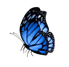 Mariposa azul. Foto de archivo.