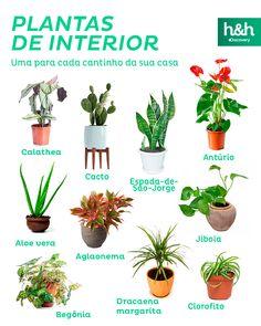 Discovery Home & Health House Plants Decor, Plant Decor, Indoor Garden, Indoor Plants, Plant Magic, Small Courtyard Gardens, Inside Garden, Decoration Plante, Home Health