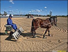 la trilla de l'arròs Valencia, Horses, Animals, Agriculture, Naturaleza, Animales, Animaux, Horse, Animal Memes