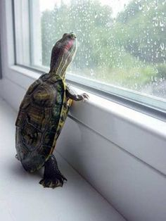 A Touching Turtle. We become #attached_to_our_pets as we take care of them.  Simply the #routine_of_taking_care_of_another living creature helps us to remain connected to the world around us.