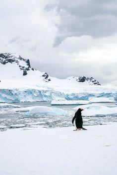 Der schönste Tag in meinem Leben - eine Reise in die Antarktis