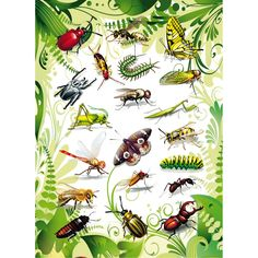 Kriebelbeestjes praatplaat Science For Kids, Science Nature, Insect Crafts, Preschool Learning Activities, Bugs And Insects, Fauna, Animals For Kids, Animal Pictures, Creepy