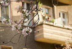Spring in #Berlin on Neu4bauer