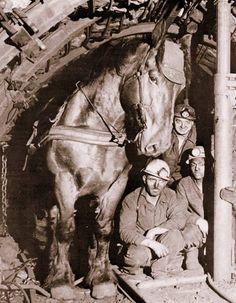 Koempel op vier benen - Paarden deden vroeger het zware trekwerk ondergronds in onze mijnen