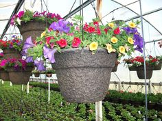 We offer a variety of sizes and styles to meet individual needs and desires. We also offer boxes of bedding plants of seasonal favorites in large quantities. Some favorites include Geraniums, Marigolds, and many more. Hanging Baskets, Geraniums, Lush, Photo Galleries, Planter Pots, Bedding, Boxes, Meet, Seasons
