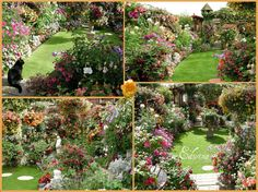 https://flic.kr/p/5gFTkk | My Summer Garden