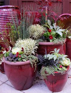 Winter container gardens - deep red, black, white & greens