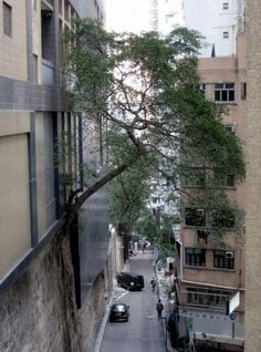 Despite #HongKong's exceptional urban landscape, nature will always find a way!