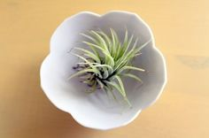 10 Ways to Display Air Plants | Apartment Therapy