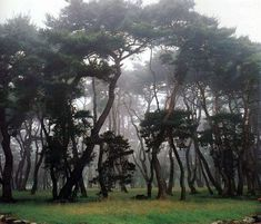 A pine forest around the three royal tombs on Mt.