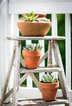Old step ladder makes a great plant holder! frozen mt dew