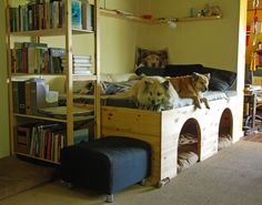Built-in dog beds underneath people bed except... it looks like the dogs prefer the people bed. Nice idea though and easy to do in a kid's room.