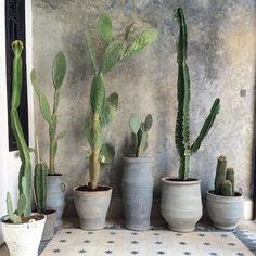 Cactus in pots on ornamental tile floor