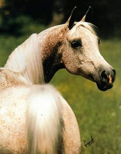 Gwyndalyn  http://www.sporthorse-data.com/d?i=10366662