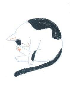 Cat Illustration by Furutani Michiko