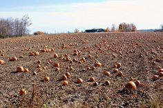 Do You Know the Pumpkin Man Who Lives Down the Lane?  by Tamera on Etsy