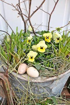 for spring-tinker-natural materials-garden-veranda-terrace-bucket-pansy - Spring Decoration, Vibeke Design, Spring Garden, Pansies, Pretty Flowers, Natural Materials, Holiday Decor, Nature, Plants