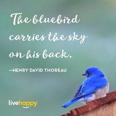 Live Happy Quotes | Henry David Thoreau