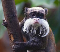 mustache mania!!