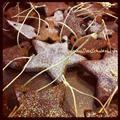 Linked to: www.sunscholars.com/2012/11/glittered-cinnamon-ornaments.html