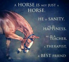 So true a horse is your best friend.You can understand that when you have one.