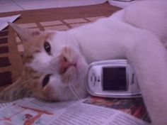 A call? Uh no, better have catnap