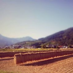 Kenichi Kamio - The rice field of autumn from Today's piano piece Oct.1st,2014 「秋の田んぼ」広い田んぼ秋景色。のどか。