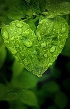 Green Leaf Heart with Water Drops