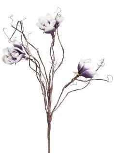 Bloem Magnolia: altijd kleur op je terras. In roze en paars verkrijgbaar #leenbakker #terrasideeen