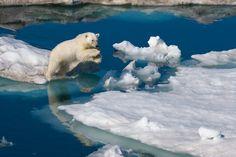 In der Hudsonstraße in Kanada springt ein Eisbär über Gletschereis. Die Aufnahme stammt von dem kanadischen Biologen und Fotografen Paul Nicklen. Er fotografiert mit Vorliebe überall dort auf der Welt, wo es besonders kalt ist.