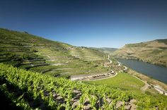 Douro Valley and Wine Day Trip from Porto with Cruise and Optional Lunch For Port Wine lovers!Come aboard on this full day tour and discover the beauties of northern Portugal.Visit the magnificent historical centre of Amarante and get to know the historical village of Provesende in the Douro region. Upon arrival in Pinhão, in the heart of the Alto Douro Wine Region, you will have time to enjoy a delicious lunch. Then relax while cruising along the dazzling Douro River and enj...