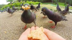 Second step to mastering the GoPro. - Weekend Wildlife