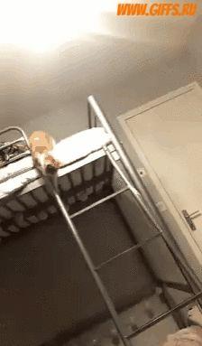 Падающий кот (гифка). Смешная гифка с падающим котом, который очень смешно спустился с кровати. Скачать гифку с котом бесплатно.