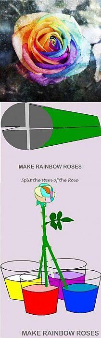 różyczki z bibuły