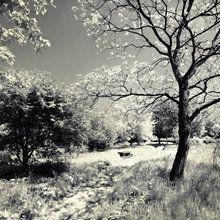 Valokuvatapetti - Woodland