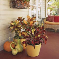 Fall plants/decor