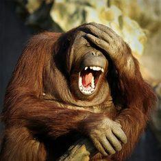 ༺♥༻神*ŦƶȠ*神༺♥༻ by Tsahizn Tseh Smiling Animals, Happy Animals, Cute Funny Animals, Funny Animal Pictures, Animals And Pets, Funny Monkeys, Animals Planet, Wild Animals, Primates