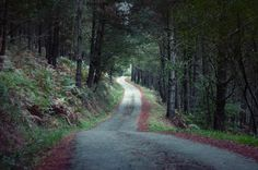 Rural #road in a dark pine #forest by Irantzu Arbaizagoitia on Creative Market