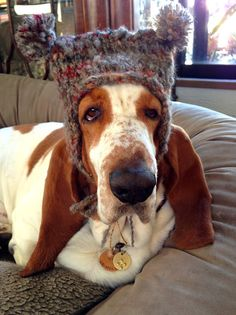 Ready for Canada!  This looks like our last Basset, 'Archie'.