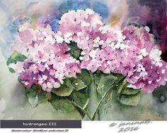 hydrangea-III / Watercolour 30x40cm on Arches CP © janinaB. 2016