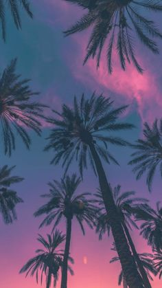 New Wall Paper Iphone Summer Paradise Phone Wallpapers Ideas Paradise Wallpaper, Beach Wallpaper, Summer Wallpaper, Tree Wallpaper, Iphone Background Wallpaper, Scenery Wallpaper, Nature Wallpaper, Foto Nature, Palm Tree Sunset