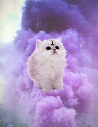 #Cats #crystalcats