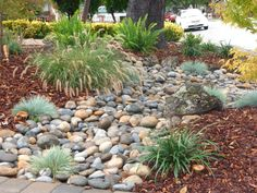 Low maintenance is what everyone wants.  This front yard design Incorporated  a dry-creek bed with a few native plants. We help to conserve water by installing drip irrigation with an automatic timer, this will keep our plants watered during the hot summers.